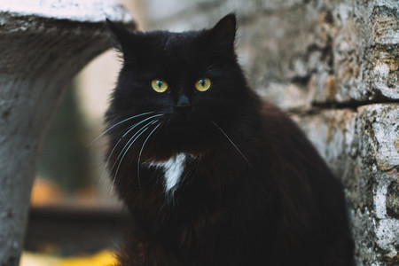 Portrait of black cat with green eyes in the vicinity of the medieval castle Halloween concept