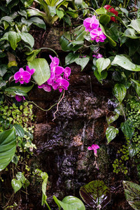 Decorative waterfall with tropical plants and a pink orchid in a greenhouse