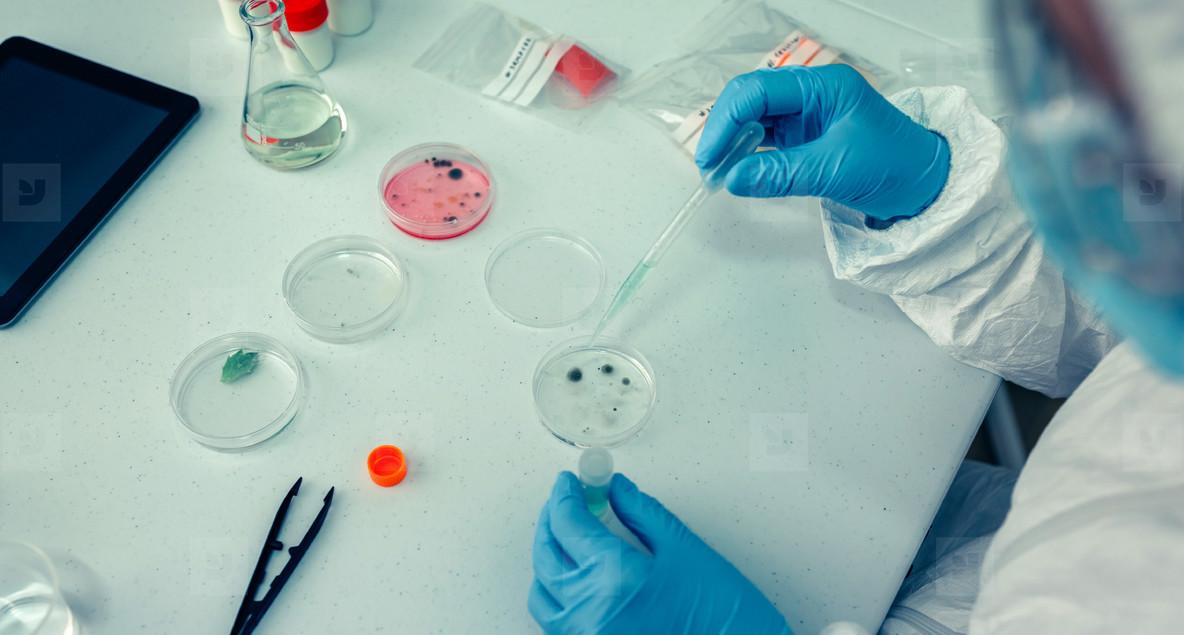 Scientist with a petri dish in the laboratory