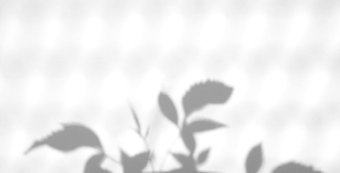 Realistic leaves natural shadow overlay effect on white texture