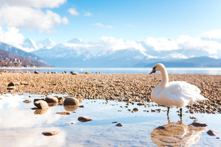 Lake Thun  Switzerland