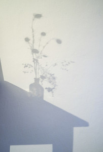 Shadow of thistle plant in vase
