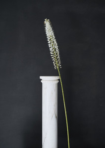 Studio shot flower stem leaning against small pedestal
