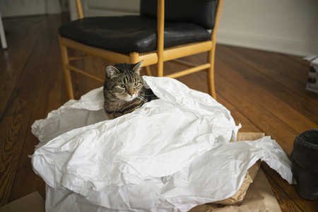 Cat inside paper bag