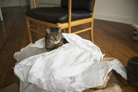 Cat inside paper bag