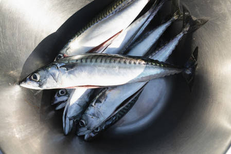 Fresh fish in stainless steel bowl