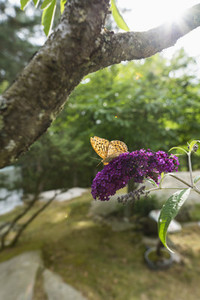 Butterfly on purple flower in garden
