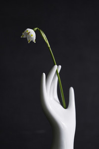 Porcelain hand holding delicate white flower stem