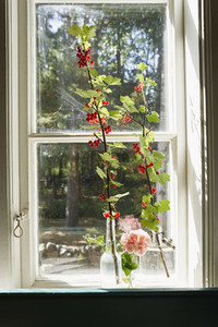 Red berries growing on branches in sunny window