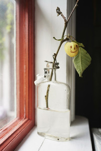 Smiley face on yellow cherry plum branch in window