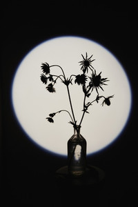 Silhouette spiny plant in glass bottle vase