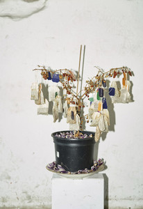 Dried tea bags hanging from dead potted plant