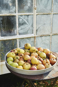 Rotting apples in rustic tray