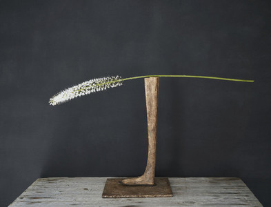 White flower stem on wooden pedestal