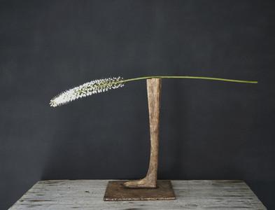 White flower stem on wooden pedestal