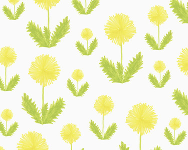 Illustration of yellow dandelion flowers on white background