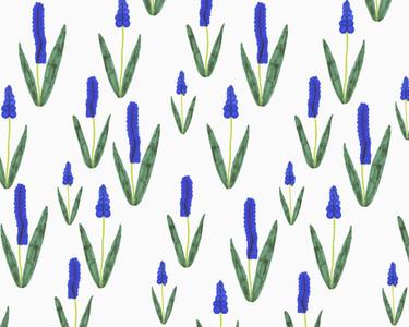 Illustration of grape hyacinth flowers on white background