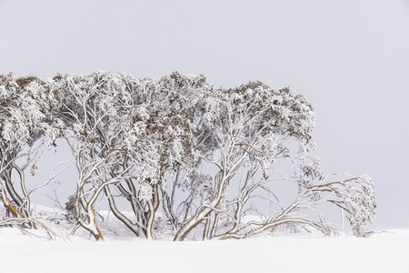 Snow covering trees in snowy winter field