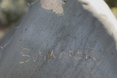 Close up summer text etched into cactus leaf