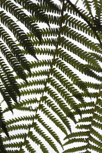 Close up green fern branches against white background