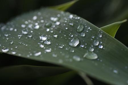 Close up fresh rain drops on green leaf