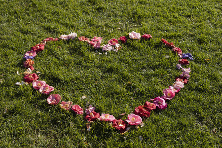 Flowers forming heart shape in sunny green grass
