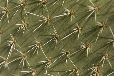 Extreme close up spiky green cactus leaf