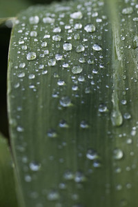 Extreme close up raindrops on green leaf