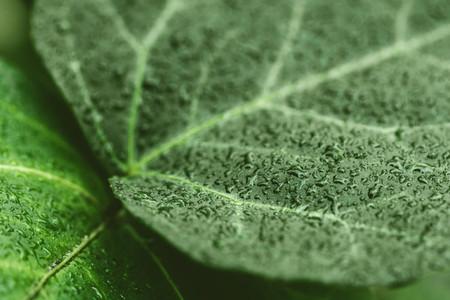 Macro photo of the wet green leaf  Full frame background