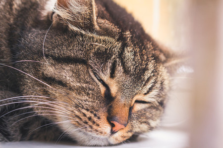 Portrait of a sleeping striped cat on a window sill