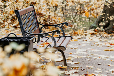 Fallen leaves laying on a bench in an autumn garden