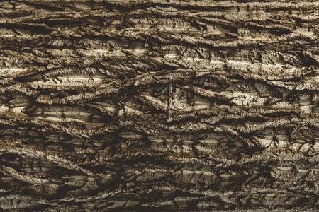 Full frame of tree bark of old tree