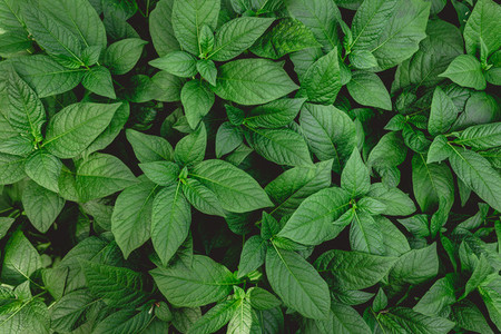 Top view of green plants Nature full frame background