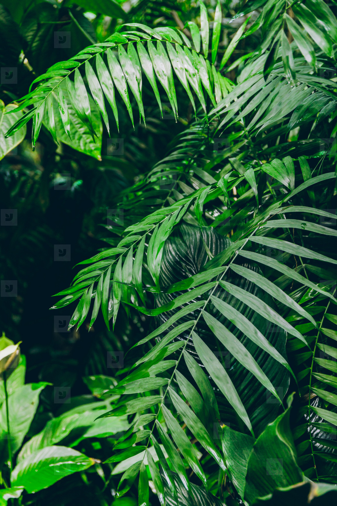 Palm forest  The concept of tropics nature