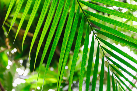 Close up view of palm leaf in a tropical garden