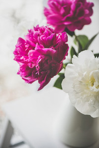 Purple and white peony flowers in vase