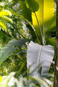 Tropical plants Vertical