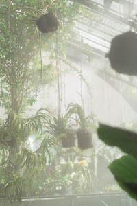 Tropical plants in a greenhouse