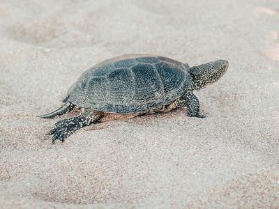 Beautiful small turtle crawling on the sand near the sea