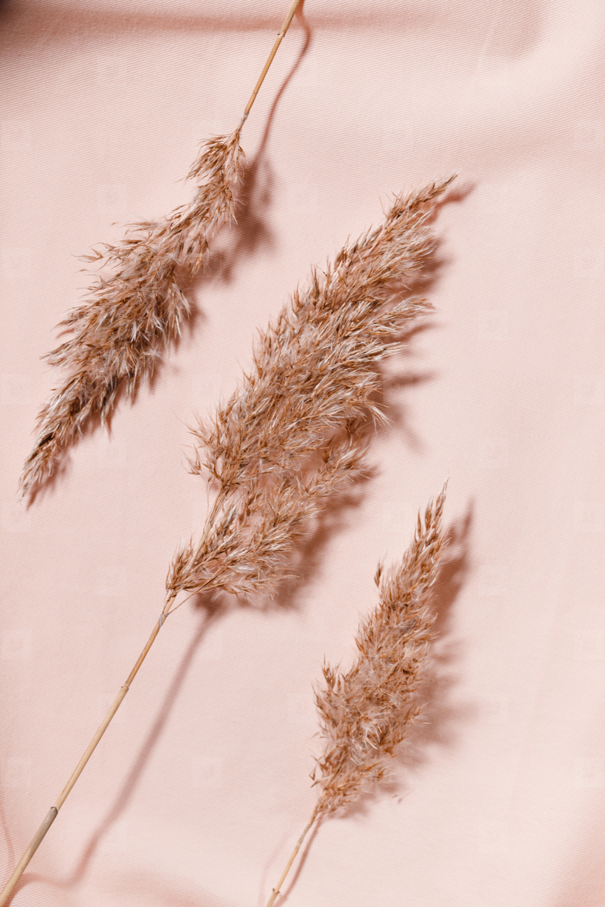 Abstract minimalist still life composition with dried reeds over pink cloth