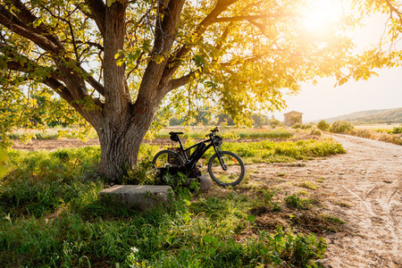 Bicycle under a tree in the field with sun flare