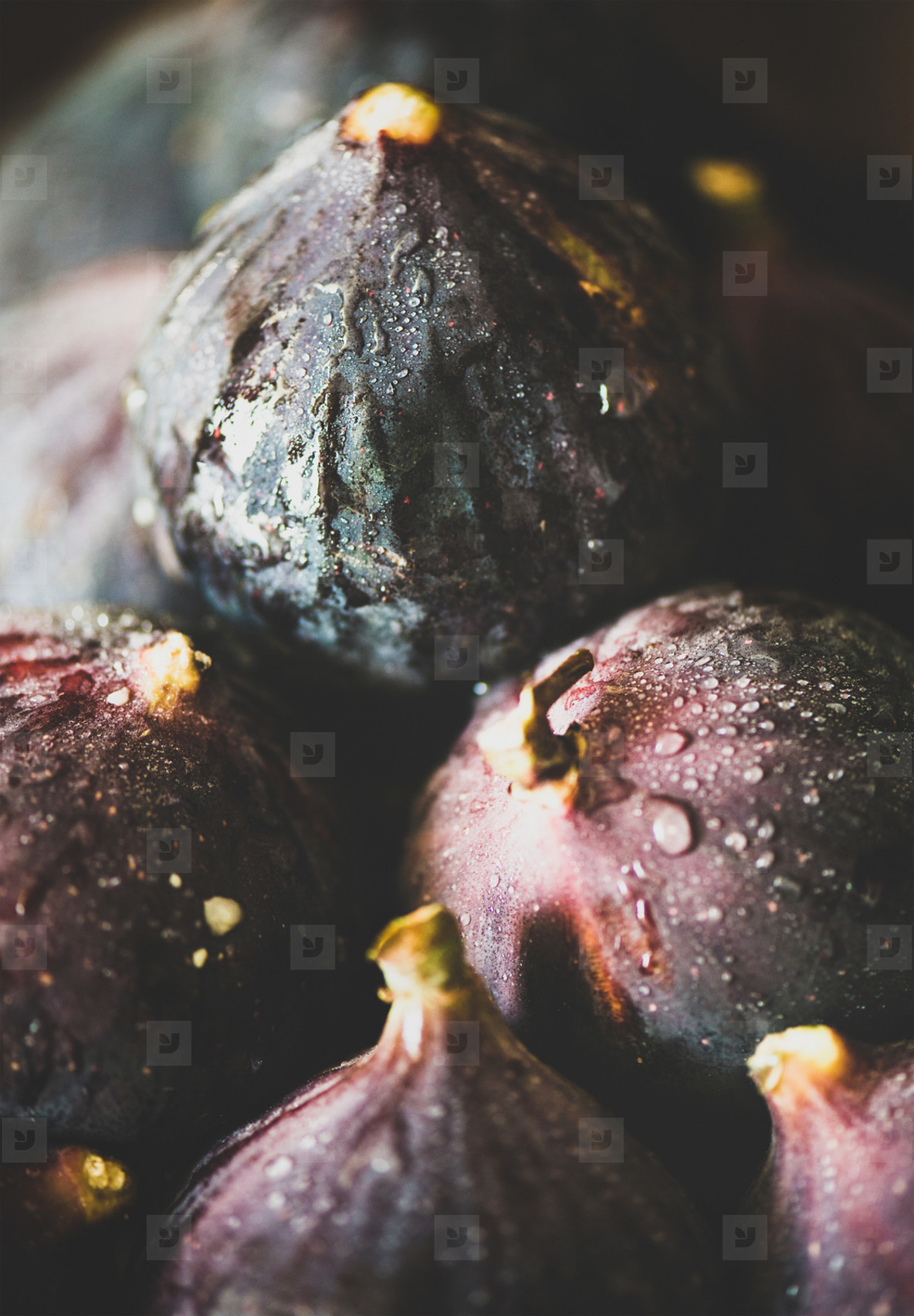 Fresh ripe seasonal harvested wet purple figs  close up