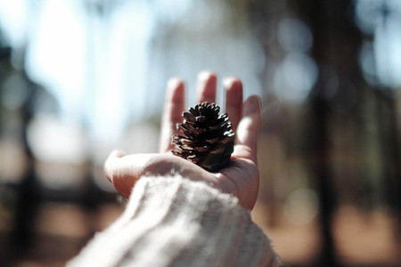 Pine cone on hand