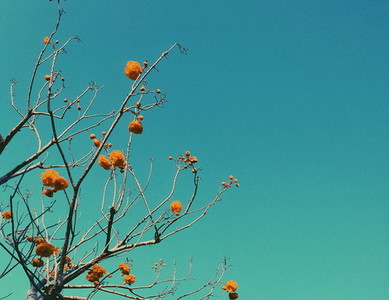 Flowers branch on blue sky