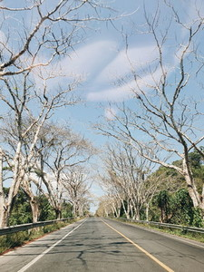 Leafless tree tunnel road