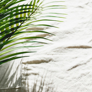 Abstract summer background with palm leaf and shadows