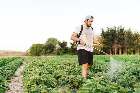 Farmer man spraying organic herbicide on the crop