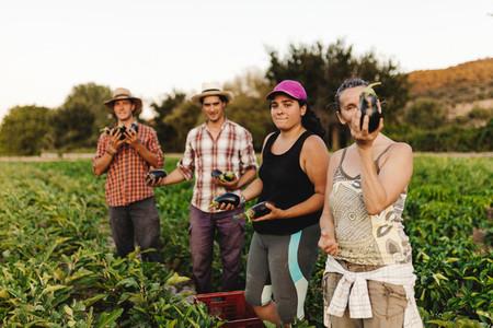 Farmers harvesting in the field