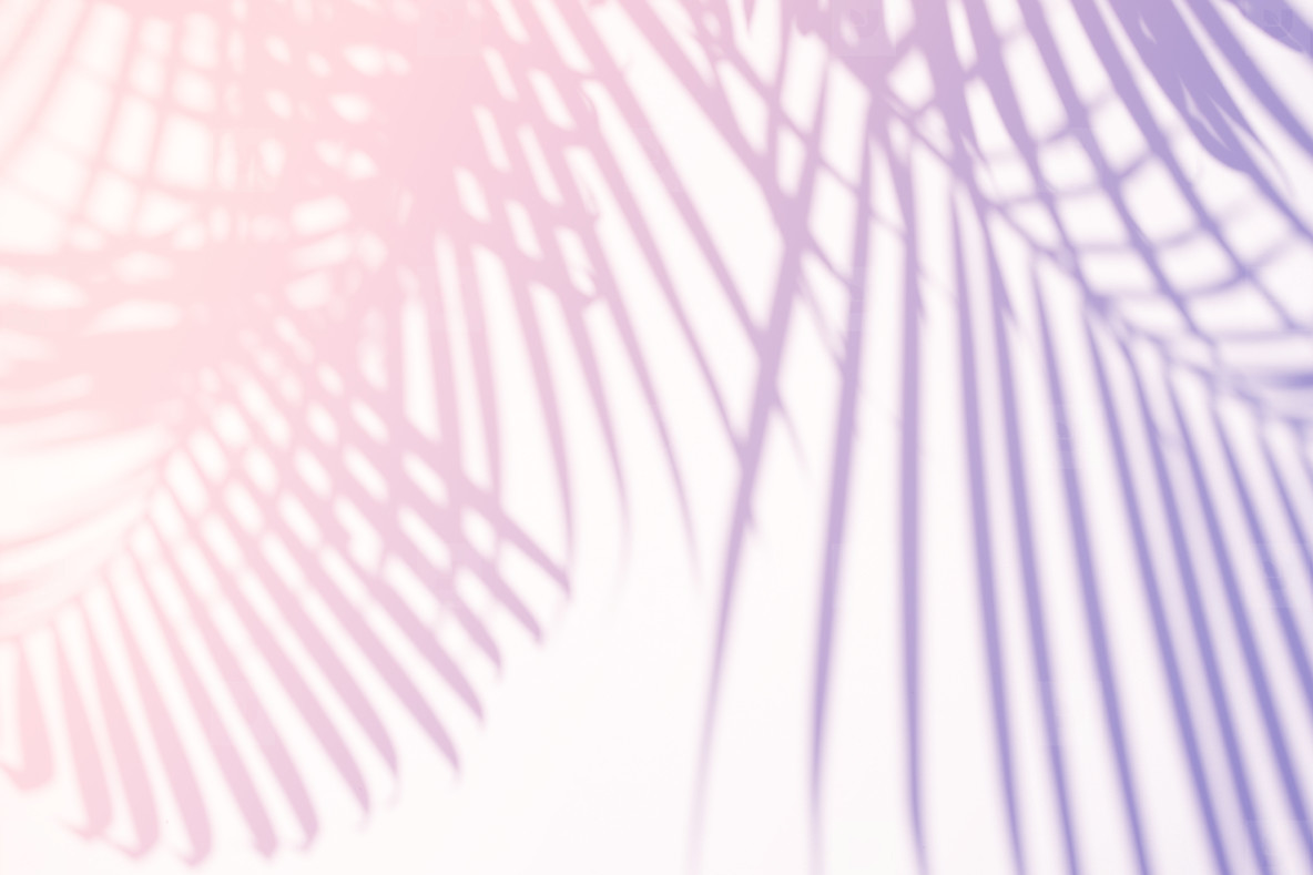Photos Tropical Palm Leaves Natural Shadow O 209235 Youworkforthem Here you can explore hq tropical leaves transparent illustrations, icons and clipart with filter setting like size, type, color etc. tropical palm leaves natural shadow overlay on pastel gradient t