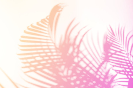 Tropical palm leaves natural shadow overlay on pastel gradient t